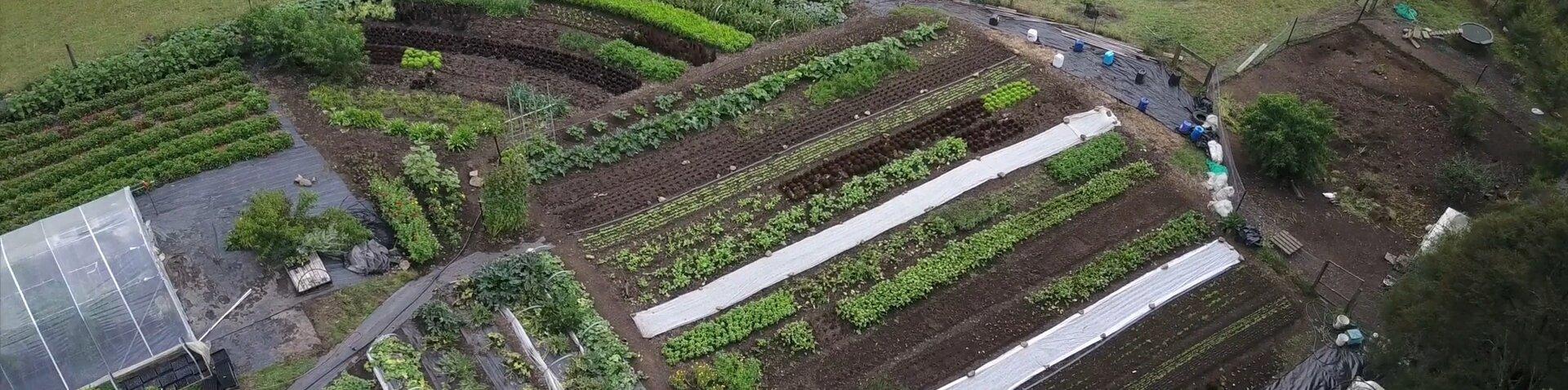 Resturant Garden Design | Pakaraka Permaculture
