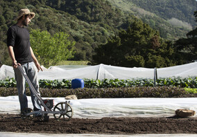Introduction To Organic Market Gardening Online Course  - coming out September 2019